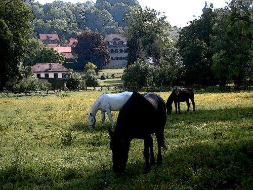SchlosspPferde